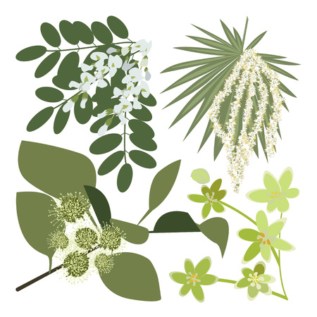 Set of drawing wild flowers, herbs and leaves, painted field plants, botanical illustration in flat style, colored floral collection, hand drawn vector image eps10  イラスト・ベクター素材