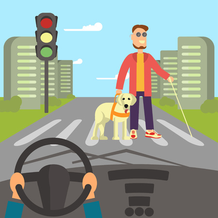 cross street with care: A blind man with guide dog and walking stick is crossing street. Human hands driving a car on asphalt road with disability person walking on the crosswalk, car interior, flat design vector illustration.