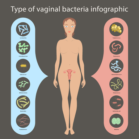 intestinal flora: Gynecology Vector illustration. Womans vaginal flora or microbiota in vagina, Good and Bad Bacteria