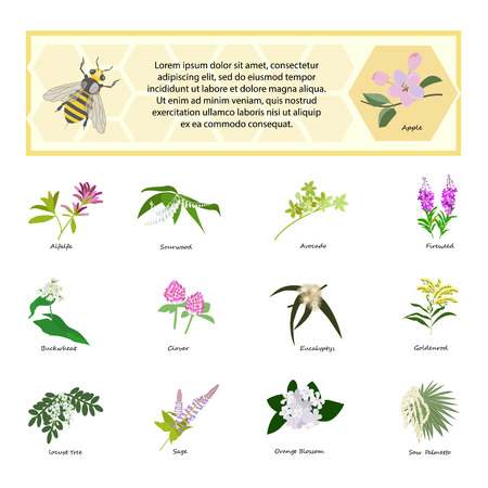 palmetto: Honey set for banner, exhibitions, posters. Flowers, bees and honeycomb. Hand drawn design element. Place for text. vector Illustration