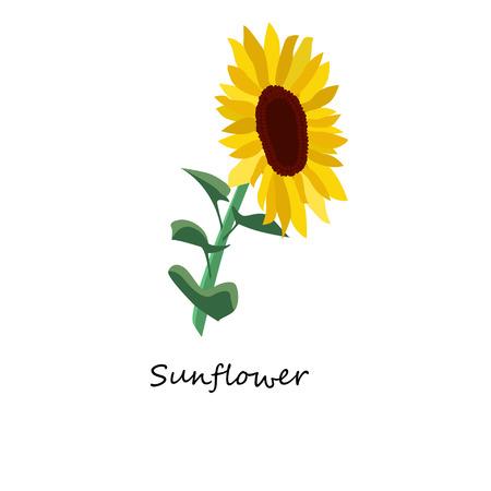 pedicle: Sunflower. Honey planty.