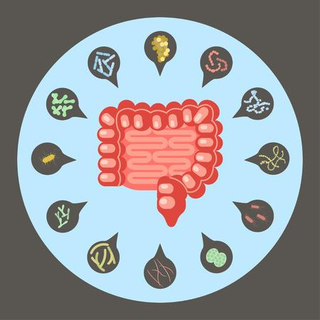 Ensemble de bactéries entériques
