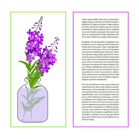 fireweed: Card with Fireweed Flower