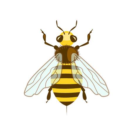 Honey Bee in flat design. Icon isolated on white background. Vector illustration