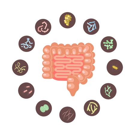 Infografía de intestinos con microbiota en diseño plano. Ilustración vectorial