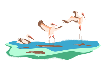Wild birds in flat modern design. Cartoon pelicans in different poses on a green background. Vector illustration eps 10.