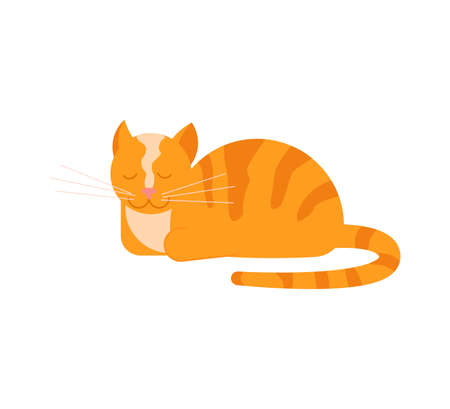 The ginger cat lies with its paws tucked and purrs. Square card with funny kitten in flat design. Happy cats day. Flat Art Vector Illustration