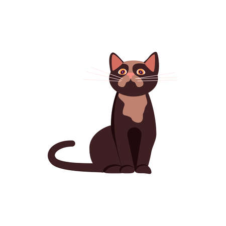 Brown cat sitting and looking up. Square card with funny kitten in flat design. Happy cats day. Flat Art Vector Illustration