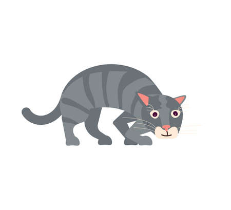 Playful gray cat cautiously sneaks steals. Square card with funny kitten in flat design. Happy cats day. Flat Art Vector Illustration
