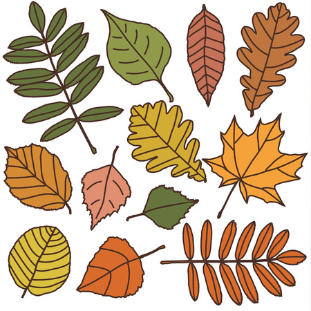 deciduous: vector set with autumn leaves