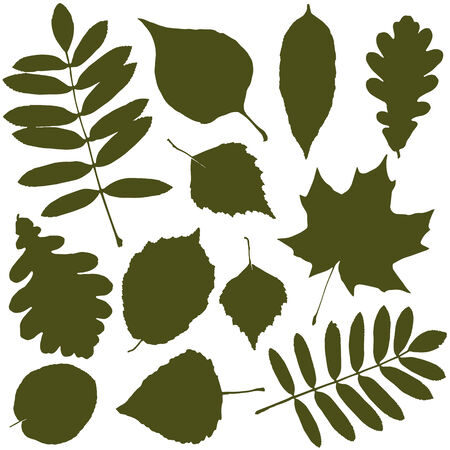 elm: vector set with autumn leaves