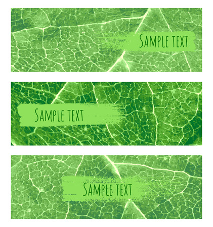 Vector nature green leaf banners set. Background with hand drew brush strokes