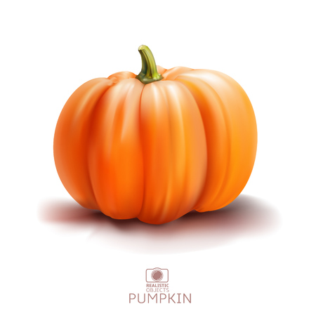 Realistic vector illustration of pumpkin isolated on white background