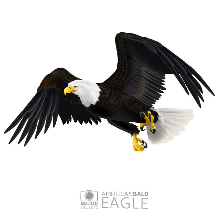 A vector illustration of american bald eagle in flight isolated on white background Vectores