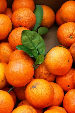 foetus: Orange crop