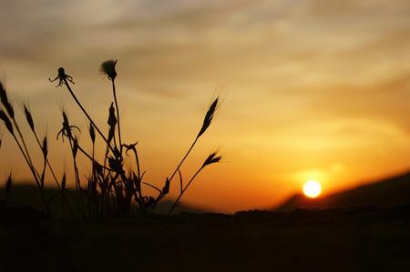 palate: World at sunset