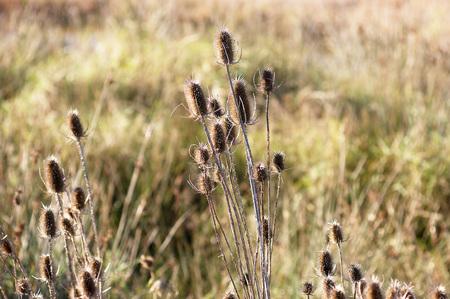 wizen: dried herbs