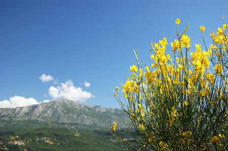 grower: Landscape with yellow flowers