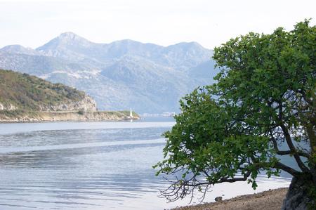 boka: The tree on the shore of Boka Bay Stock Photo