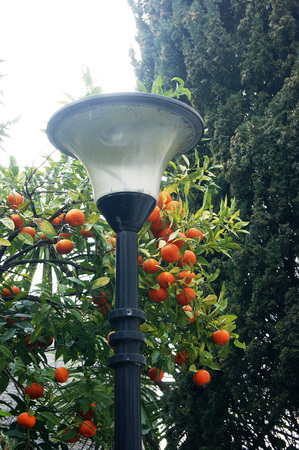Mandarins and lantern