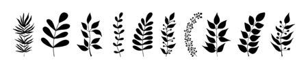 Set of black silhouettes of tropical leaves on an isolated white background. Botanical tree branches, palm leaf on the stem. Spring summer leaf. Concept design icons. Vector illustration.