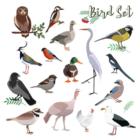Bird set cartoon colorful vector illustration. Educational material.