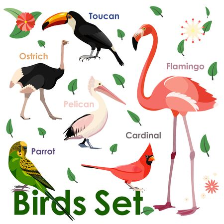 Vector bird icons. Colorful realistic birds. Educational material