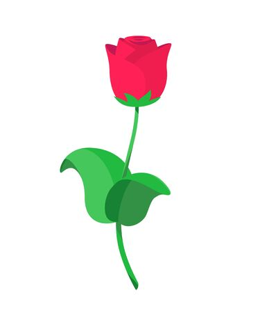 Vector illustration of single red roses in flat style Illustration