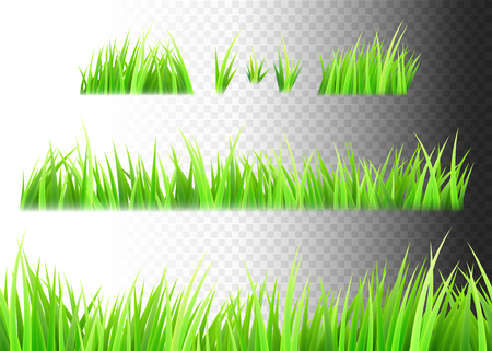 Grass vector isolated on white, black and transparent background. Tufts of grass