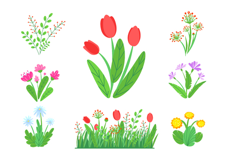 Spring garden flowers vector with blooming grass border. Simple plant bouquet illustration. Springtime nature elements isolated on white background. Illustration