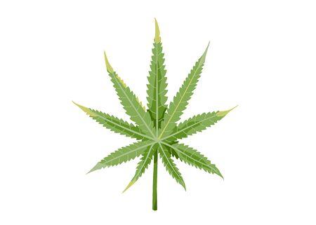 Green cannabis leaf isolated on white background. Vector illustration of hemp in simple flat cartoon trendy style Vektorgrafik