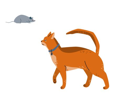 An Abyssinian cat watches the grey mouse. Vector illustration in simple cartoon flat style. Isolated on white background