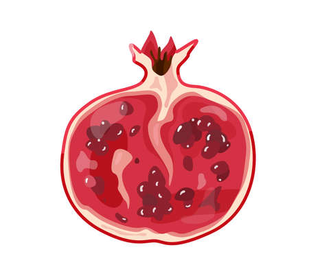 Red half pomegranate fruit in bright color cartoon flat style isolated on white background. Healthy food vector illustration. Organic meal concept