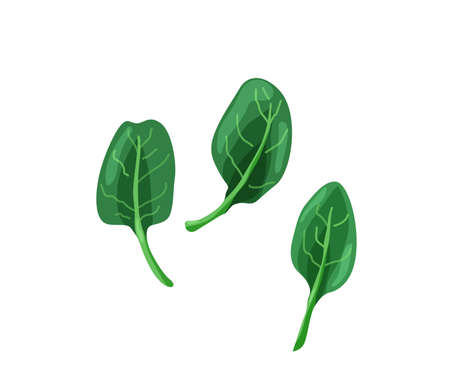 Green baby spinach in bright color cartoon flat style isolated on white background. Healthy food vector illustration. Organic meal concept  イラスト・ベクター素材