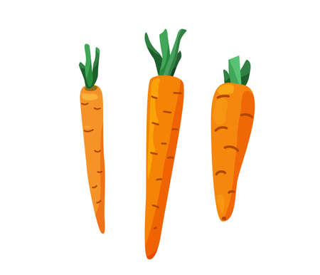 Three carrots with cut leaves in bright color cartoon flat style isolated on white background. Healthy food vector illustration. Organic meal concept