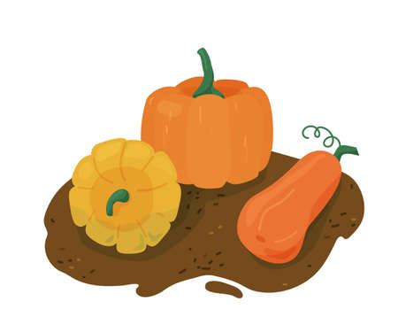 Pumpkins group on ground vector illustration. Design elements for seasonal greetings with halloween, thanksgiving day. Isolated on white background