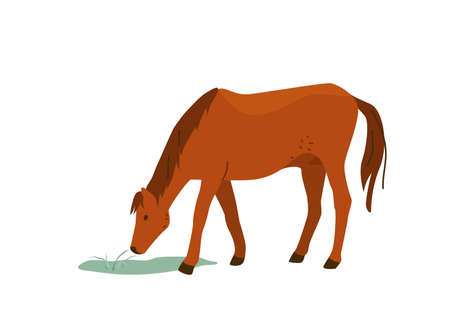 Brown horse eat grass vector illustration. Isolated on white background. Mare equine in simple cartoon flat style Illusztráció