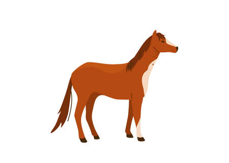Brown horse stand vector illustration. Isolated on white background. Mare equine in simple cartoon flat style Illusztráció