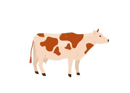 Spotted red and white cow stand vector illustration. Isolated on white background. Dairy industry in simple cartoon flat style