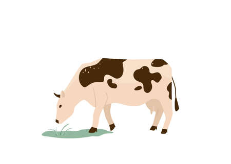 Spotted black and white cow eat green grass vector illustration. Isolated on white background. Dairy industry in simple cartoon flat style Vetores