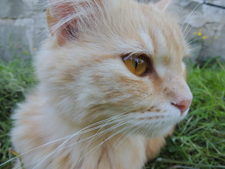 waif: Red-haired cat in the street. House is reflected in her eyes