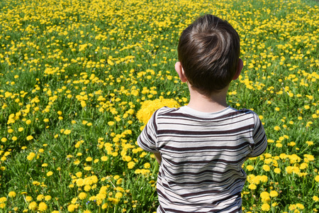 not give: boy stands with a bouquet of yellow dandelions. He is offended and does not want to give Stock Photo