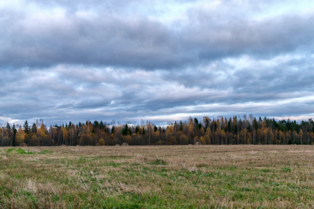Autumn Landscape, field, yellowing trees in the forest, low overcast clouds. Stock Photo