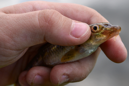 Childs hand holding a small fish, closeup. Stock Photo