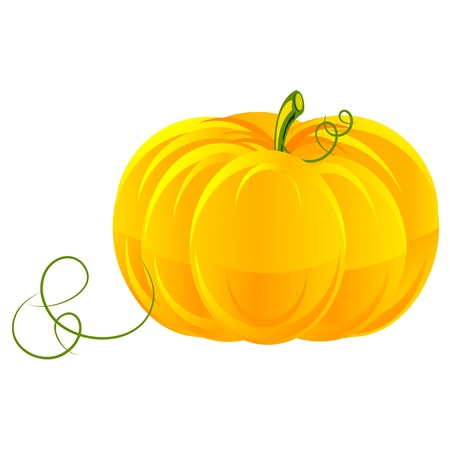 pumpkin vegetable fruit,  isolated, vector Vector