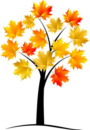 sycamore leaf: Maple tree autumn leaf  Illustration