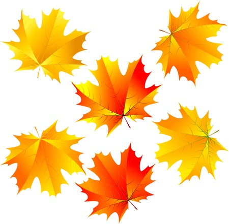 vector maple leaves Stock Vector - 10482273
