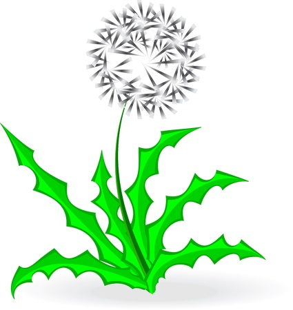 dandelion, over white,illustration, vector Vector