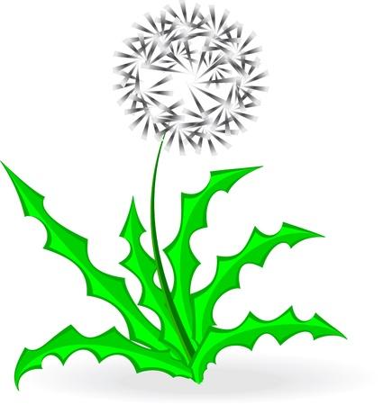 dandelion, over white,illustration, vector Illustration