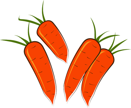 Some carrots on a white background  Vector